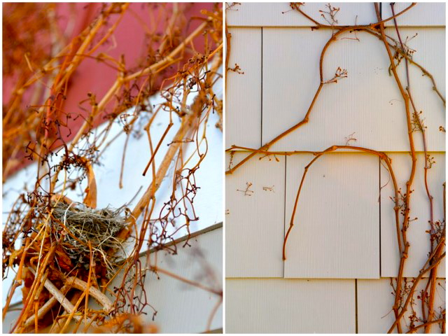 Chelan Vine Collage