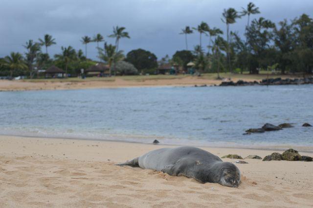 Poipu Seal